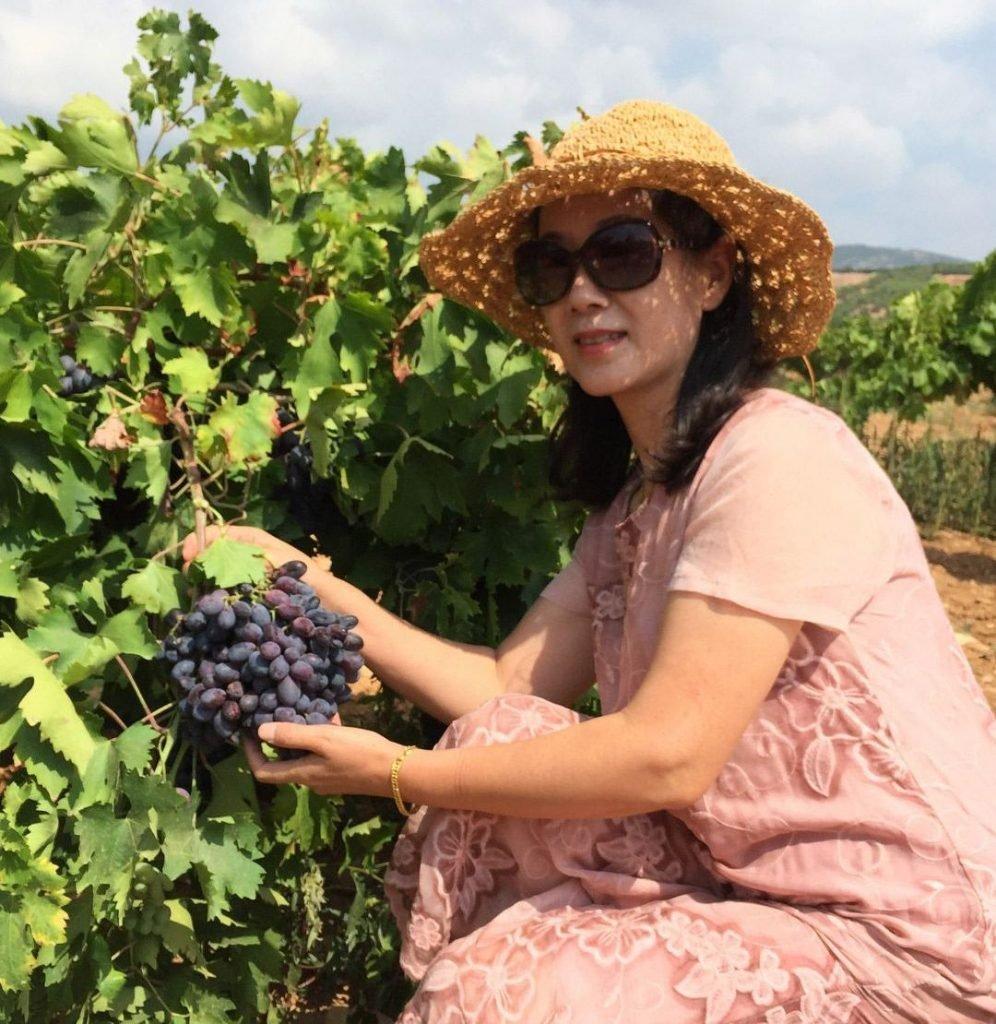 üzüm hasadı turizmi
