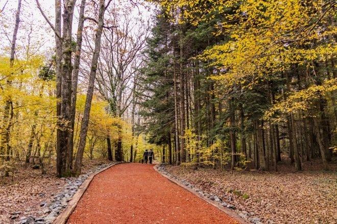 Belgrad Ormanı